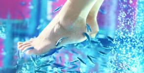 Fish SPA терапия за крачета с рибките Garra Rufa