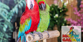 Macaw Garden Show