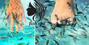 Fish SPA терапия на ходила и длани с рибки Garra Rufa - 40 минути релакс