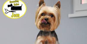 Къпане, изсушаване и разресване на куче - без или със подстригване, и бонус - почистване на уши и подрязване на нокти