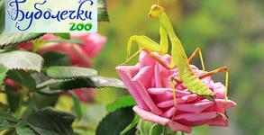 Буболечки Zoo