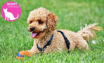 За любимото куче! Къпане, изсушаване, разресване и подстригване с професионална козметика, от Моят любимец