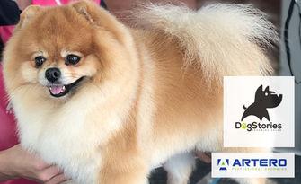 Грижа за домашния любимец! Къпане, разресване и подстригване на куче, плюс почистване на уши и нокти, от DogStories Grooming Salon