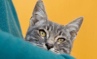 Международната изложба на котки на 22 и 23 Февруари, в Хотел Маринела