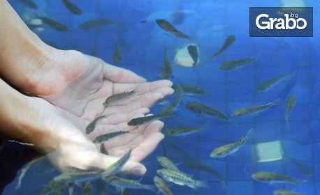 15 или 30 минути Fish Spa - удоволствие за крачетата