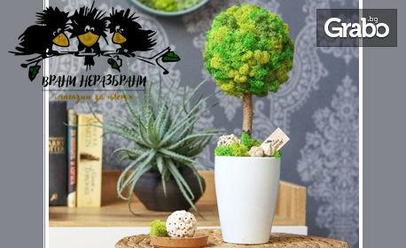 Декорация за дома и офиса! Дръвче от скандинавски мъх в цвят по избор