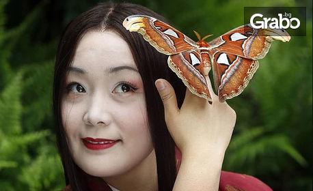 """Opera Open 2018! Гледайте """"Мадам Бътерфлай"""" от Пучини - на 23 Юни"""
