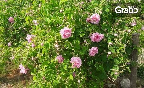 100% натурална розова вода Seven Roses - 1 или 3 броя спрей