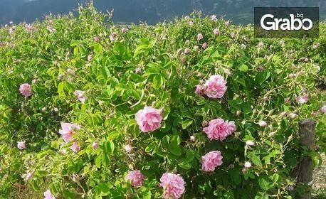 Успокояващ и хидратиращ лосион за тяло Seven Roses за след слънце или био олио против стрии Gallicanae
