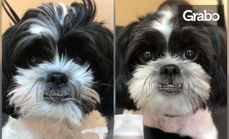 Къпане на куче, плюс SPA терапия по избор, разресване и изсушаване