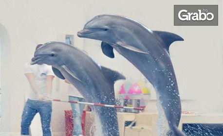 Вижте Делфин шоуто на Варна Делфинариум