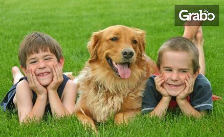 Почистване на зъбен камък на куче, плюс преглед и продукт за домашна грижа