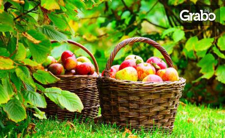 Наеми ябълково дърво за 1 година и получи готовата продуция - в градината на село Бяла Река, край Сухиндол