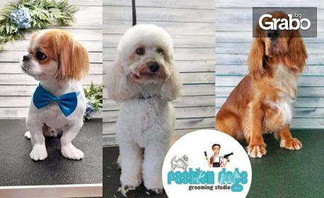 Грижа за кученцето! Подрязване на нокти и почистване на уши, къпане, сушене и разресване или цялостен груминг
