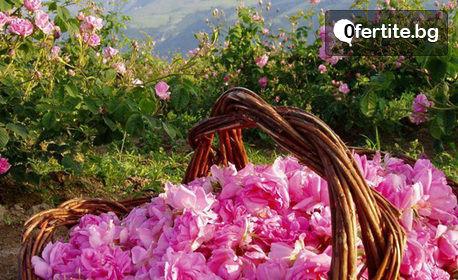 В Казанлък за Празника на розата! Нощувка със закуска, плюс транспорт и посещение на Трявна, Шипка, Етъра и Велико Търново