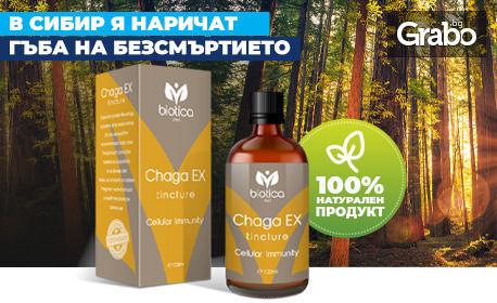 За здраве и продължителен живот! Тинктура Chaga EX