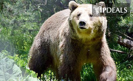Екскурзия до Парка за танцуващи мечки в Белица, Банско и Хижа Безбог! Нощувка със закуска, плюс транспорт
