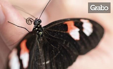 Вход за изложба на живи тропически пеперуди - в Св. св. Константин и Елена