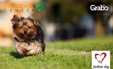 Нова прическа за кучето - в Парадайс център! Хигиенно или цялостно подстригване, или разресване на сплъстявания