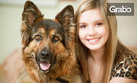 Дентален преглед на куче, плюс тест на слюнка и консултация