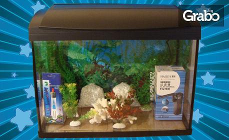 Оборудван аквариум 60л с декорация и рибки по избор - за 266лв