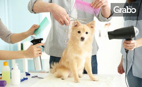 Грижа за кучето - подстригване, къпане, разресване и изсушаване