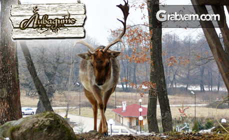 През Януари и Февруари в Родопите! Нощувка със закуска, плюс релакс зона