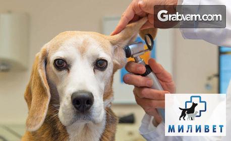 Клиничен преглед на куче или котка, плюс козметични процедури и обезпаразитяване