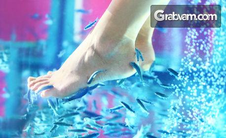 Козметичен педикюр, плюс 15-минутна Fish SPA терапия на ходила с рибки Garra Rufa