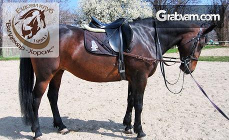 30-минутен урок по конна езда с треньор - за начинаещи или напреднали, с опция на закрито