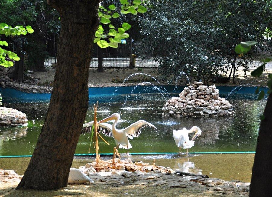 Zoopark Varna Opoznaj Bg